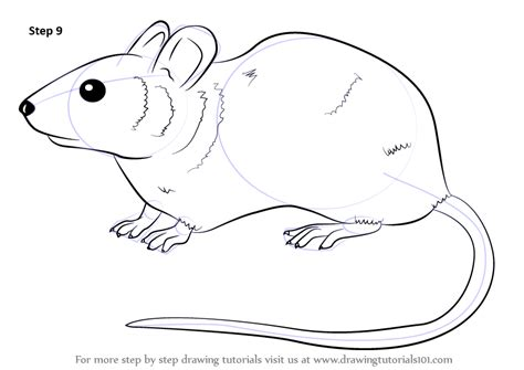 learn   draw  mouse rodents step  step drawing