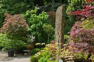 Bambus Im Garten : garten pflanzen bambus und pflanzenshop ~ Markanthonyermac.com Haus und Dekorationen