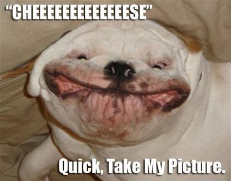 Funny Dog Face Meme - 31 very funny animal meme pictures and images