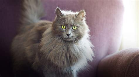 cat name female cat names