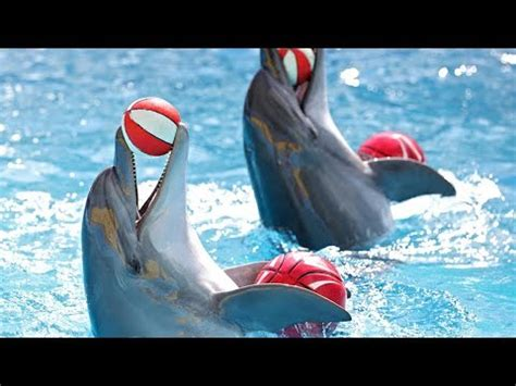 25 Cool And Absolutely Extraordinary Dolphin Facts Youtube