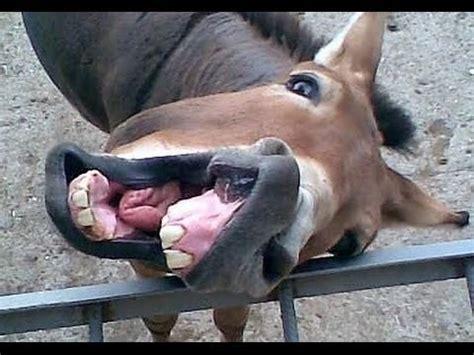 lustige tierbilder kostenlos whatsapp lustige  zum