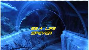 Sea Life Speyer Gutschein : sea life speyer youtube ~ Watch28wear.com Haus und Dekorationen
