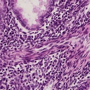 Introduction To Cells And Tissues  Histology