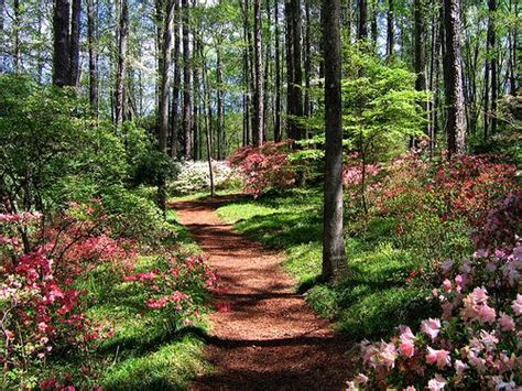 plants that like acid and shade for the pine trees