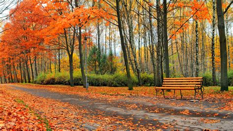 wallpaper park trees yellow leaves bench road autumn