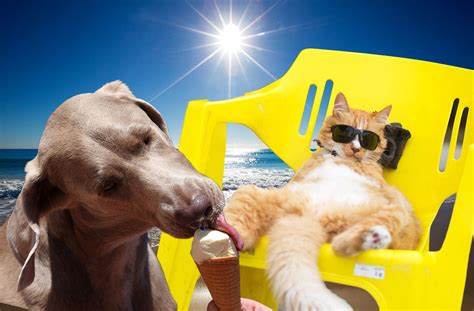 will a heat l keep a dog warm how to keep your cat or dog cool in the heat and how to