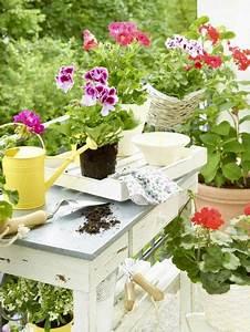Weißer Schimmel Auf Blumenerde : 5 einfache tipps so schimmelt blumenerde nicht balkon garten pinterest ~ Eleganceandgraceweddings.com Haus und Dekorationen