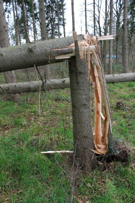 welche bäume darf man nicht fällen b 228 ume im garten f 228 llen b ume im garten planen in 4