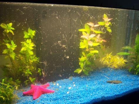 aquarium eau douce voile blanc