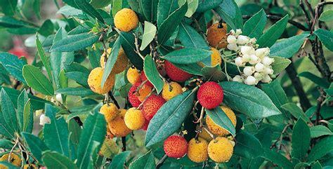 alberi da giardino piccolo alberi ornamentali cosa scegliere per il tuo giardino