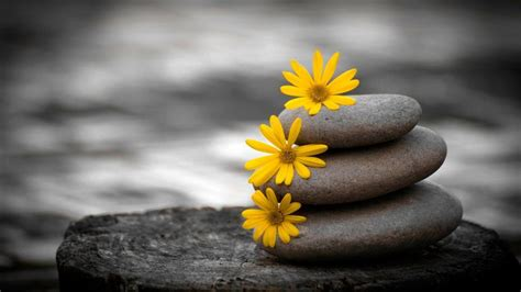 yellow flowers  pile  stones wallpaper nature