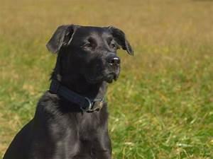 Flöhe Hund Mensch : hunde und der kampf gegen zecken und fl he die flohsaison ist da ~ Yasmunasinghe.com Haus und Dekorationen