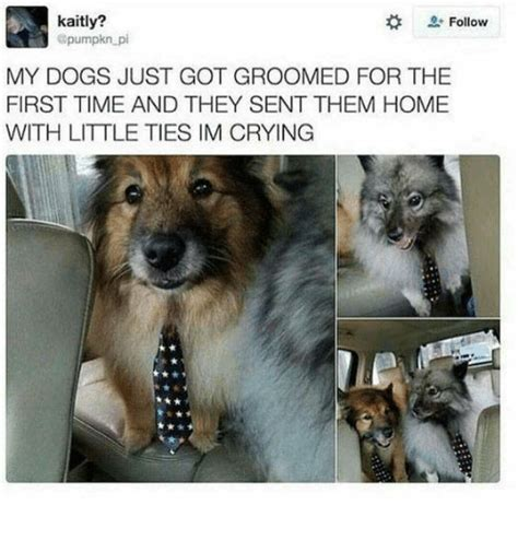 Crying Dog Meme - kaitly follow my dogs just got groomed for the first time and they sent them home with little