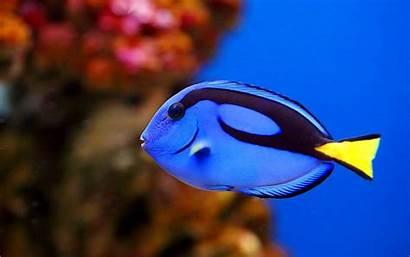 Fish Ocean Sea Fishes Underwater Nature Sealife