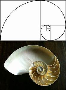15 Uncanny Examples of the Golden Ratio in Nature ...