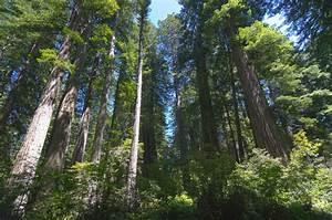 Duewest2011  Northern California Coast  U0026 Redwood National