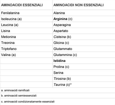 alimenti aminoacidi essenziali alan baroncini consigli per tenersi in forma aminoacidi