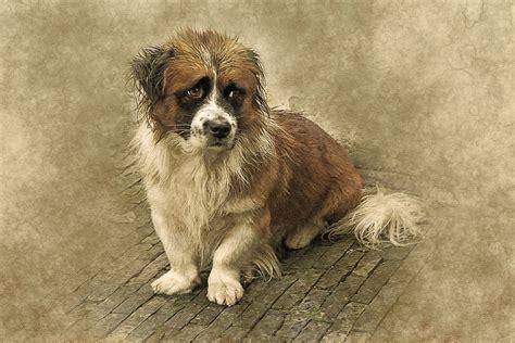 animal dog unhappy  image  pixabay