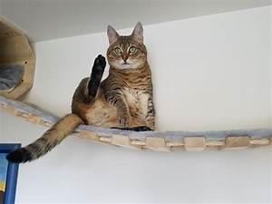 Malzpaste Für Katzen : catwalk h ngebr cke f r katzen wandkratzbaum kratzbaum massiv ~ Orissabook.com Haus und Dekorationen