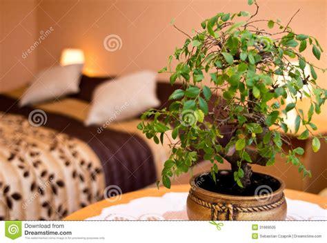 plantes dépolluantes chambre à coucher plante en pot dans une chambre à coucher photo libre de