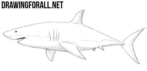 draw  shark drawingforallnet