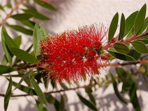 mediterrane bäume winterhart mediterrane winterharte pflanzen mediterrane pflanzen die 10 wichtigsten mediterranen pflanzen
