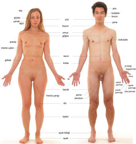 İnsan Vücudu Vikipedi