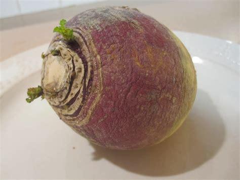 rutabaga vs turnip cannundrums rutabaga or swede