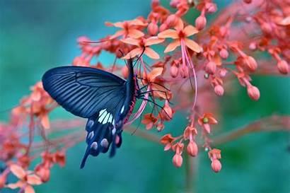 Butterfly Amazing Wallpapers 4k Flowers Flower Ultra