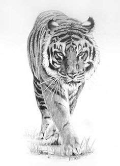 Prowling Tiger by ~peterrrrrrrrrrrrrrrr on deviantART #AnimalArt #Art #Tiger: | tiger | Tiger