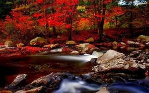 Small River In The Autumn Forest Wallpaper