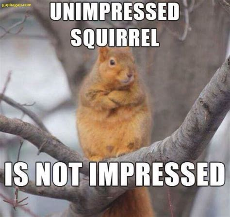 Squirrel Memes - funny picture of the day ft squirrel memes pinterest squirrel funny pictures and animal