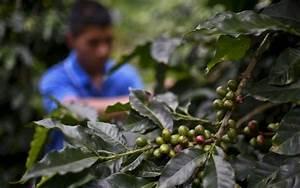 Colombie: de la guérilla à la terre mère, le retour des ...