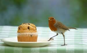 experts   birds    fed cake cheese