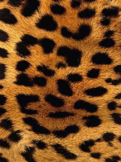 leopard skin pattern background ipad wallpaper