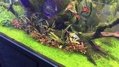 The Best Aquascape by The Best Aquascape Tank