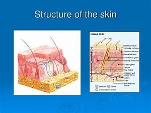 Ppt - Dermatology Powerpoint Presentation