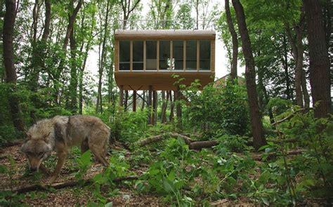 Wolfcenter Dörverden Baumhaus by Bild 5 220 Bernachten Im Baumhaus Und Nachts Mit Den