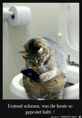 erst mal das handy checken mit bildern katzen lustige