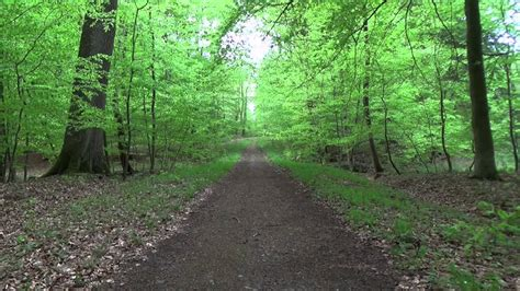 Green Forest Backgrounds by Background Forest Wald Green Screen