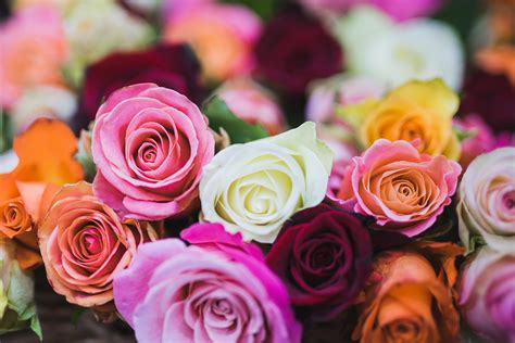 Rose Color Meanings: 12 Shades & What They Symbolize
