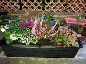 Fleur D Hiver Pour Jardinière : de belles fleurs dans une jardini re d 39 hiver ~ Dailycaller-alerts.com Idées de Décoration