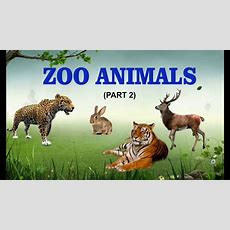 Learn Zoo Animals Names  Animals At The Zoo  Kids Video  Part 2 Youtube