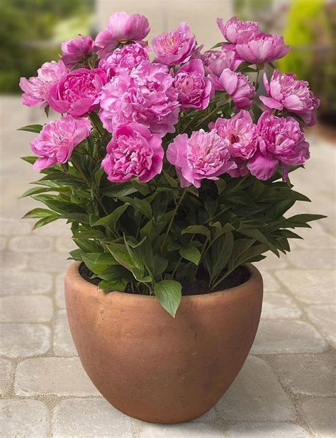 best potted flowers 1000 ideas about potted plants on pinterest potted plants patio outdoor potted plants and