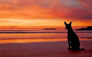 Bilder Am Strand : hund am strand bei sonnenuntergang hd hintergrundbilder ~ Watch28wear.com Haus und Dekorationen
