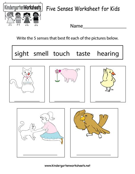 Five Senses Worksheet For Kids  Free Kindergarten Learning Worksheet