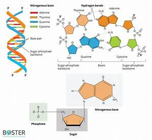 Molecular Biology Fundamental Principles Review