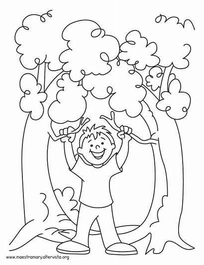 Alberi Disegni Coloring Dia Arbol Festa Dibujo