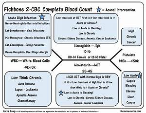 The Cbc Complete Blood Count Diagram